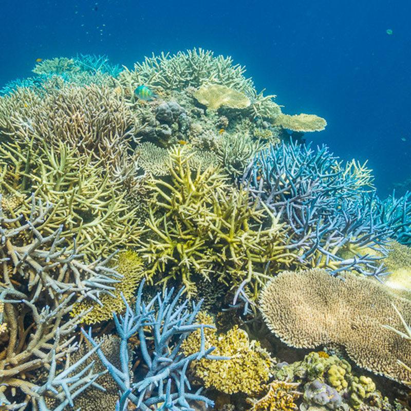 Colorful coral - Taytay Bay